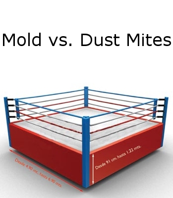 Dampness, Dust Mites and Mold